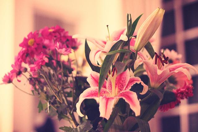 fleurs noël décoration