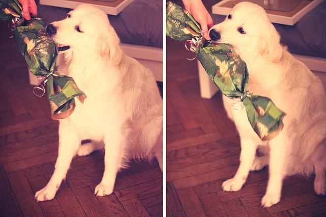 noël cadeau chien
