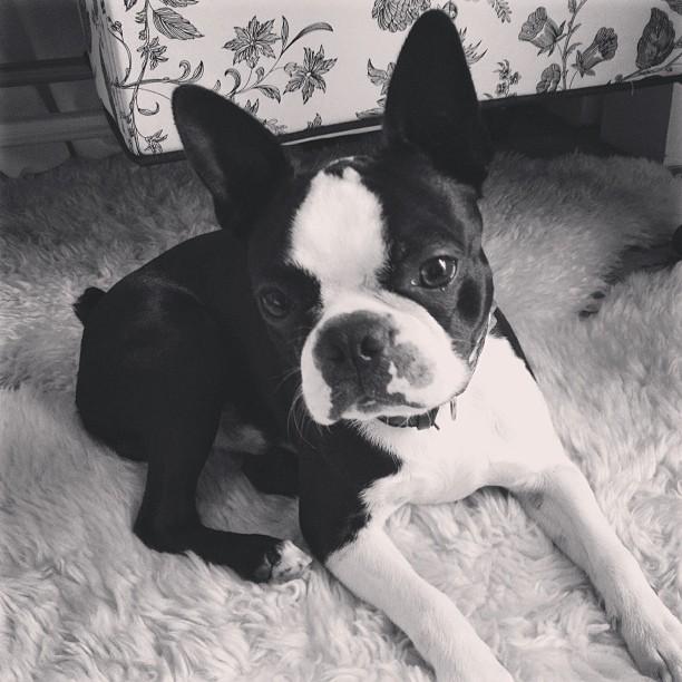 GEORGE ROYAL DOG