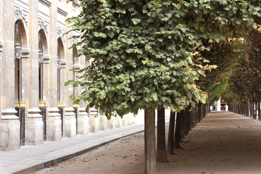 PARIS_JARDIN_PALAIS_ROYAL_ARBRES_1