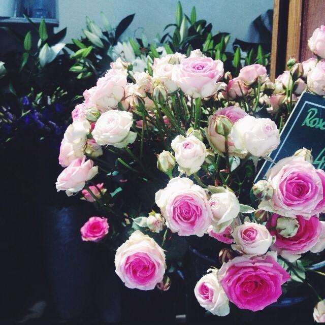 ROSE_FLOWERS