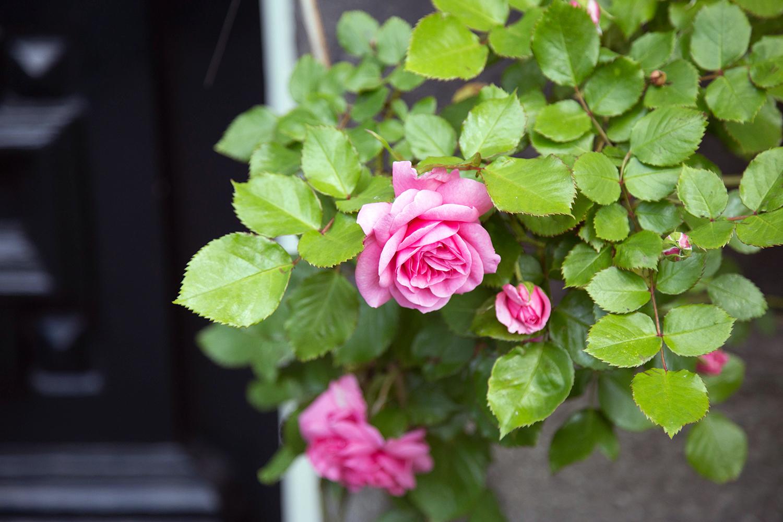 fleurs amsterdam